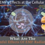 Harmful Effects Of Electromagnetic Radiation On Humans